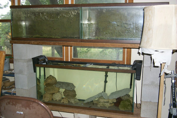 30 gallon fish tank 55 30 55 gallon dirted tank contest Thirty gallon fish tank